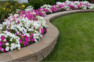 Flowers with stone wall